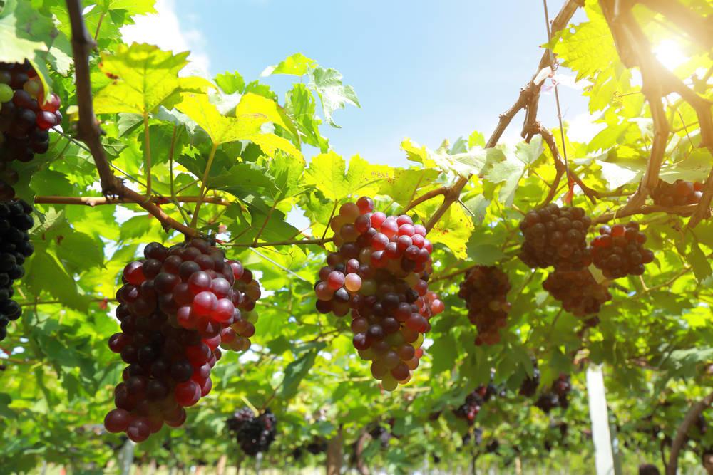 Enoturismo, una tendencia en auge entre l@s amantes del buen vino